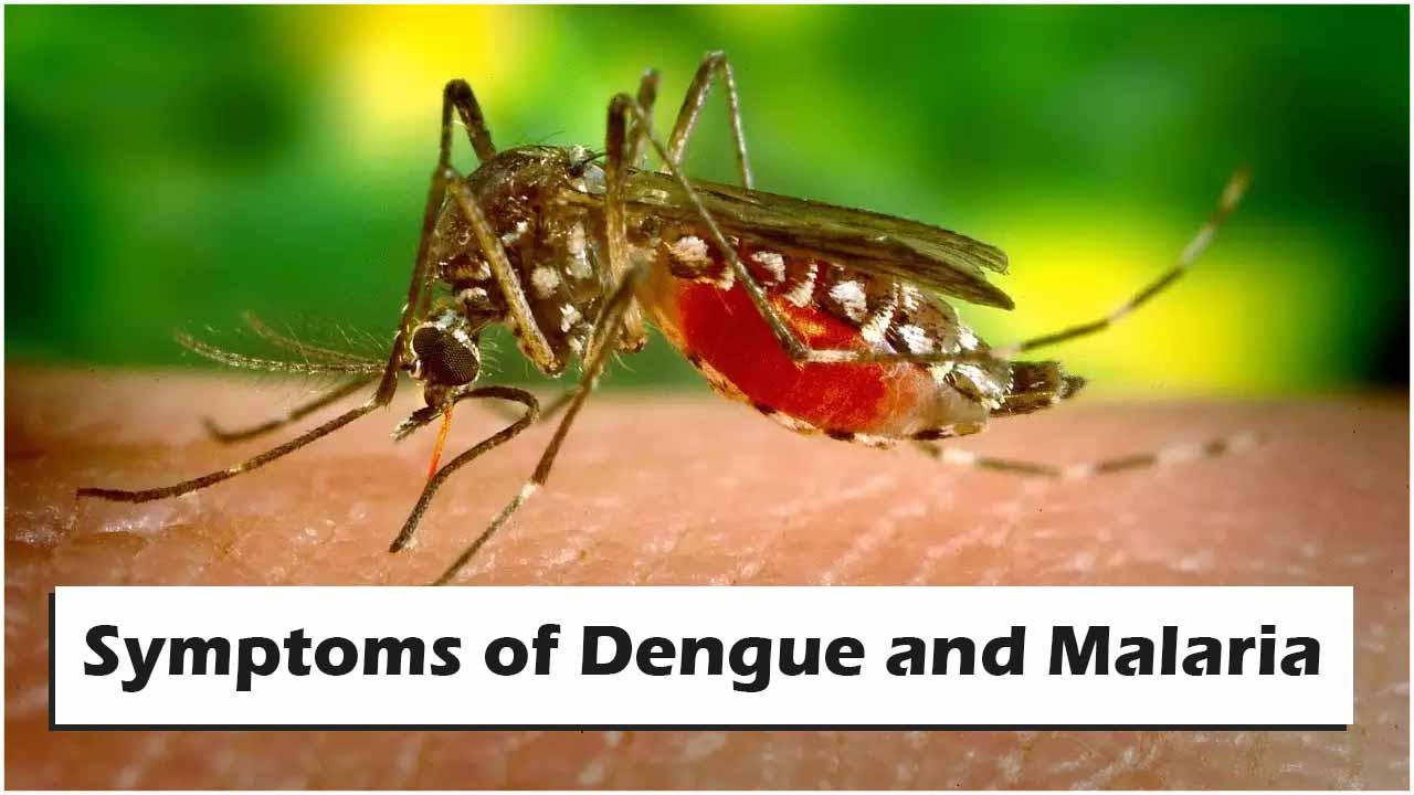Symptoms of Dengue and Malaria
